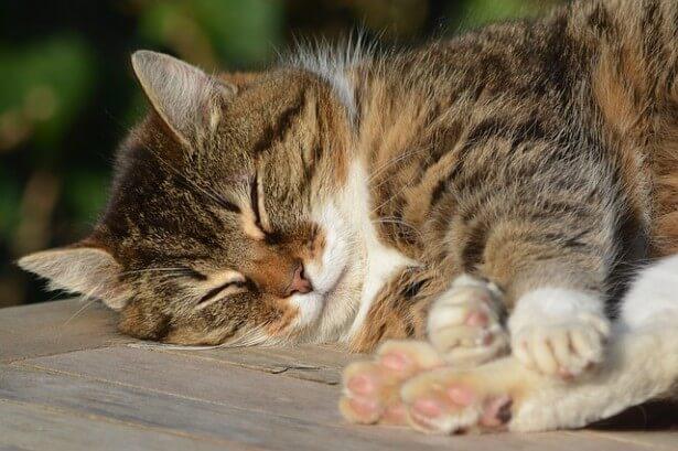 śpiący kotek