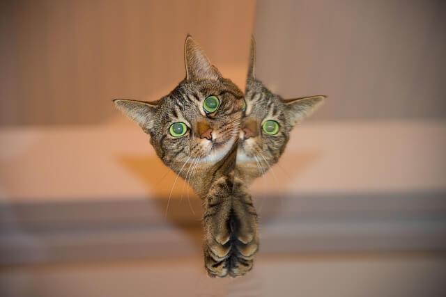 Kotek patrzy