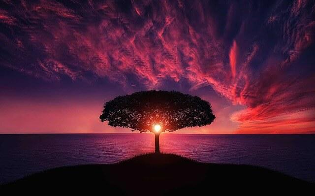 Piekne drzewo symbolizujące spokój