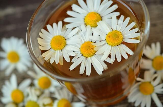 Kwiaty rumianku pływają w szklance wody