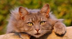 Jak długo żyją koty czyli od czego zależy kocia długowieczność