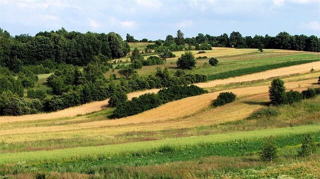 łąka w Roztoczu