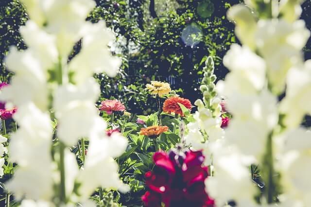 Kwiaty ogrodu botanicznego