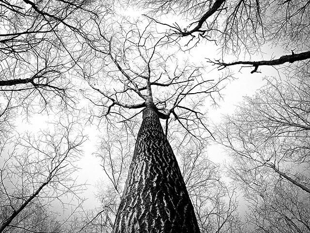 Drzewa bez liści w czerni i bieli