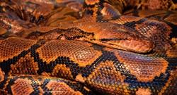 Najbardziej jadowite węże na świecie. Top 5 najniebezpieczniejszych gatunków